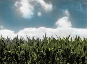 rolnik polityka rolna